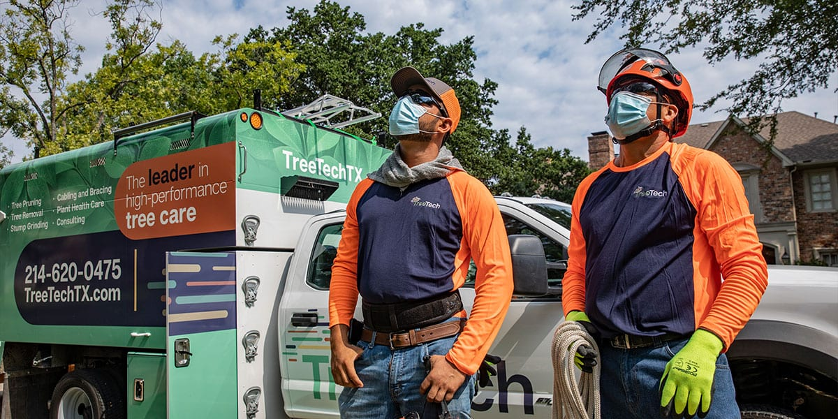 tree services Cabling and Bracing Tree Care | TreeTech TX
