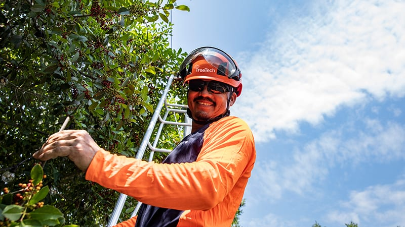 Tree Pruning is Essential for a Healthy Tree | TreeTech